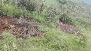 07-13-2016-Site where 5 bodies were found buried near corn farm at Loi Bu